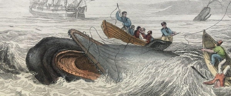 moby_dick_blog_header