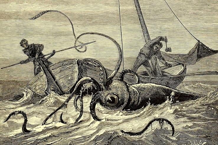 squid6