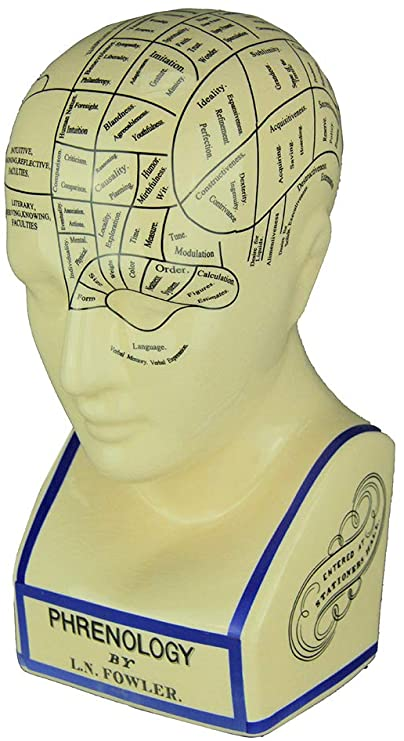 A white plastic head with various regions sectioned off, each describing a different personality trait.