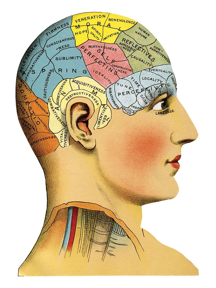 An old drawing of a human head, with different parts labeled with different personality traits, and colored different colors.